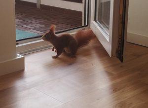 Unser Eichhörnchen